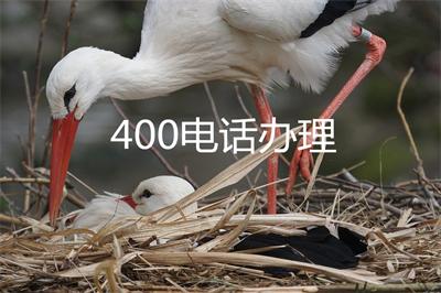 400开头中国大陆的是什么电话号码(400开头的电话)
